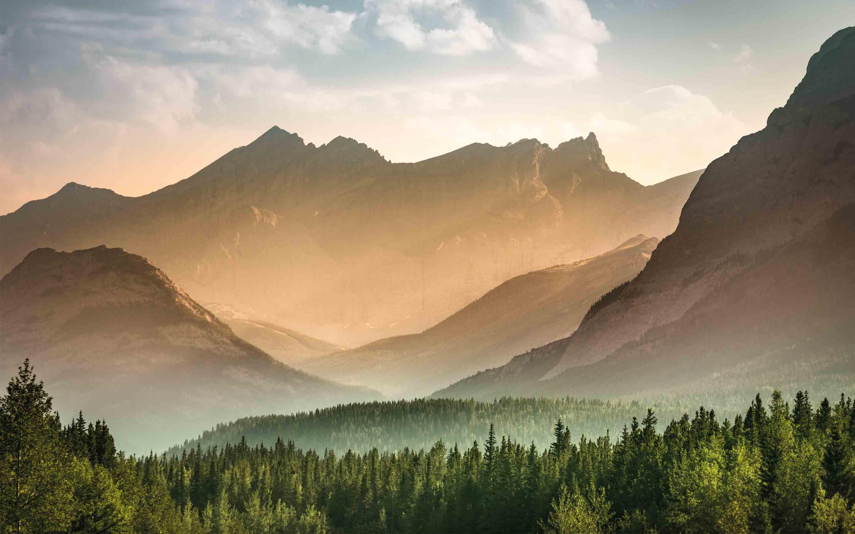 Holzschutz ist Umweltschutz