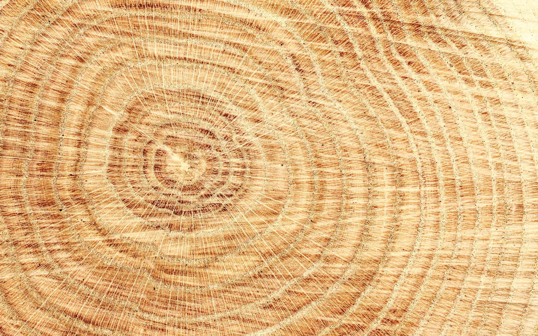 Holz – ein natürlicher Rohstoff