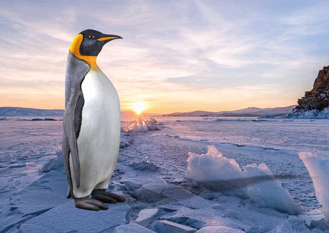 Einzigartig im Zeichen des Pinguins